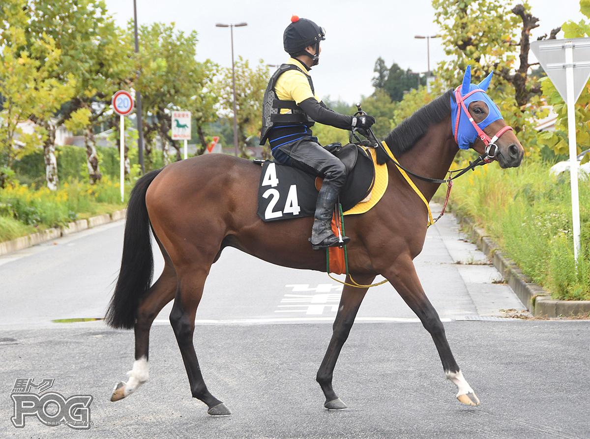 シゲルシイタケの馬体写真
