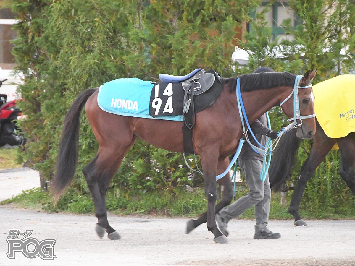 バリオスサンダーの馬体写真
