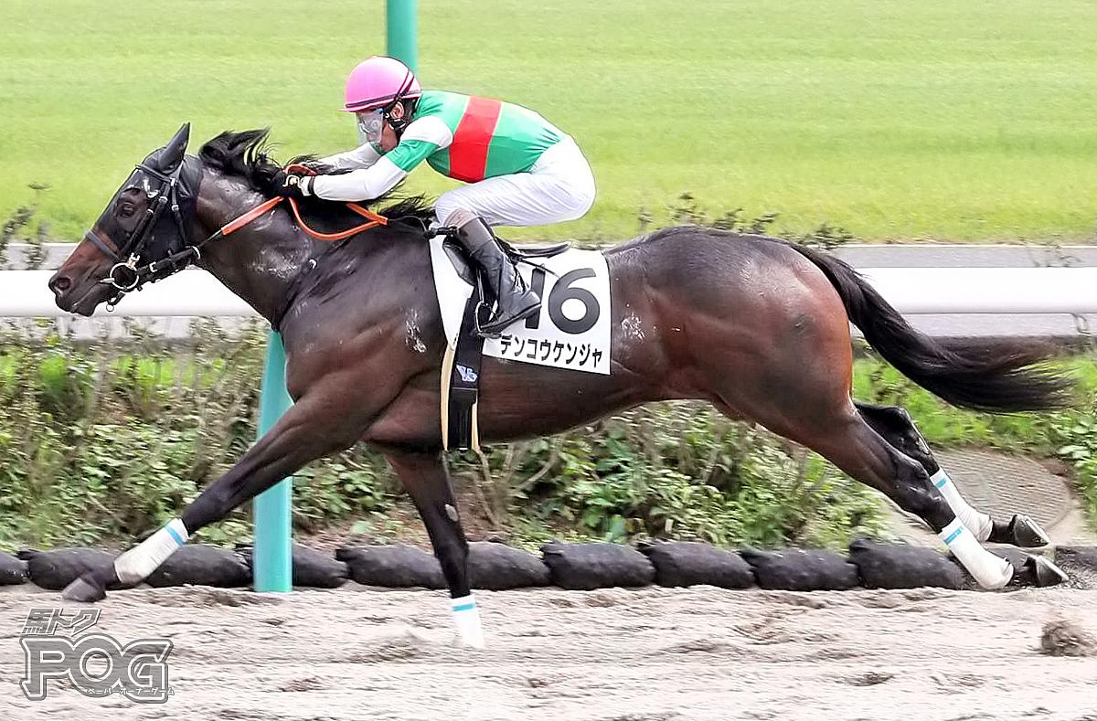 デンコウケンジャの馬体写真