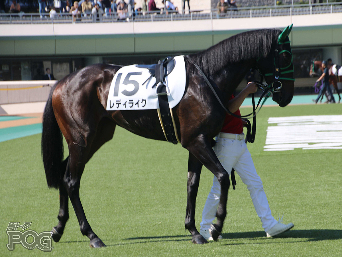 レディライクの馬体写真