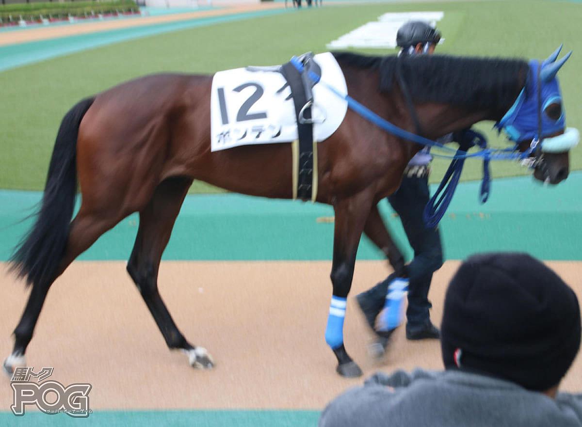 ボンテンの馬体写真