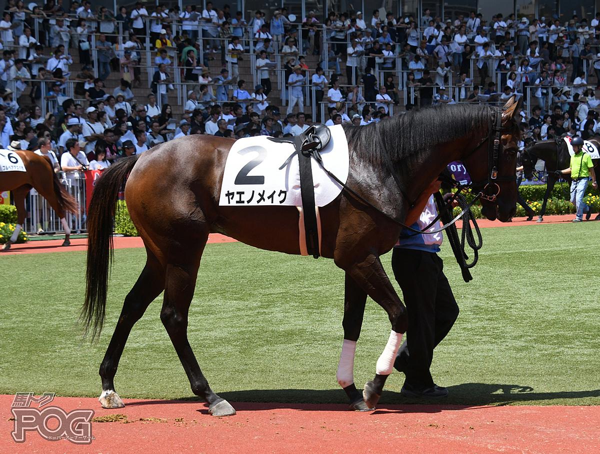 ヤエノメイクの馬体写真