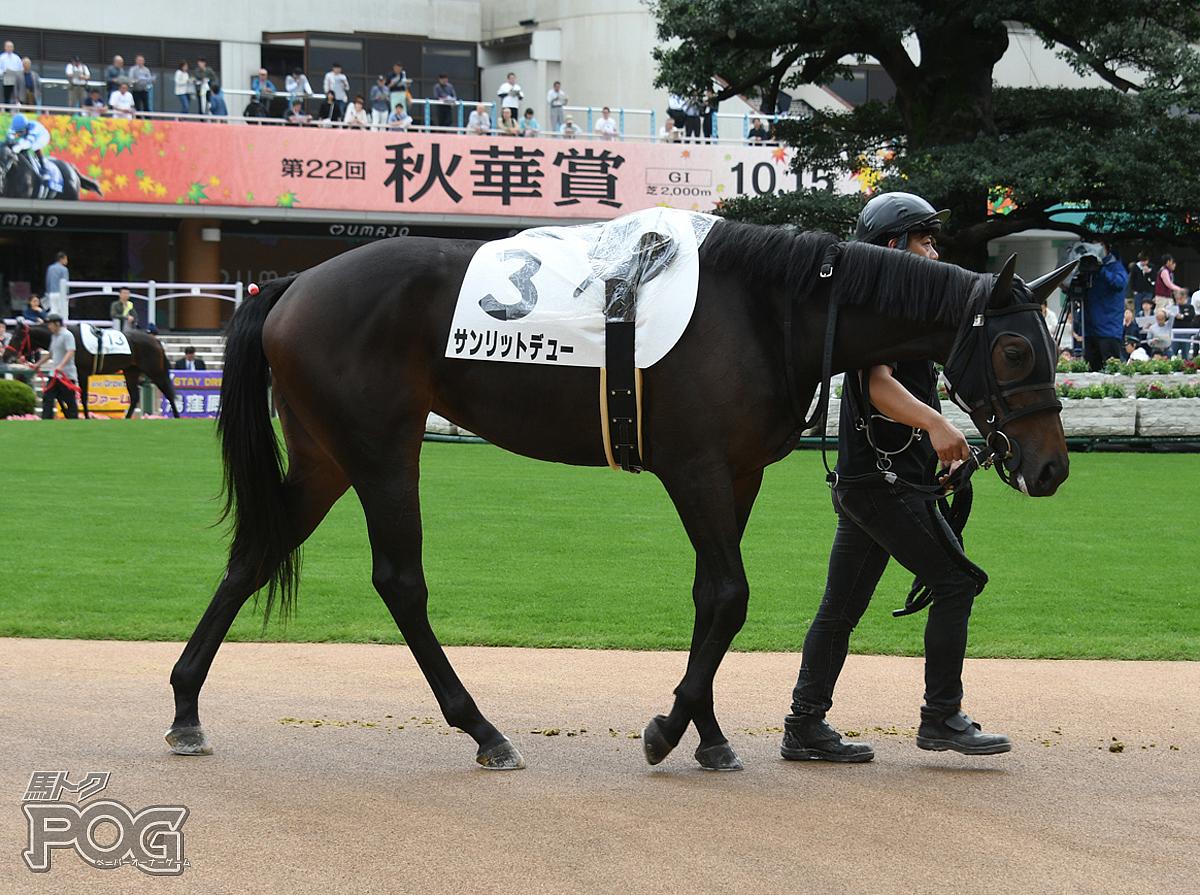 サンリットデューの馬体写真