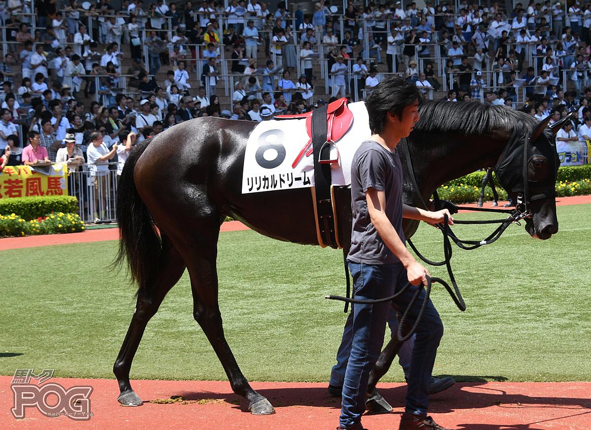 リリカルドリームの馬体写真