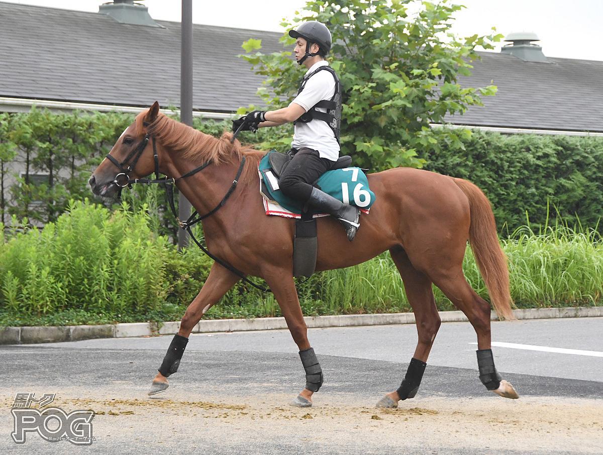 プルンクザールの馬体写真