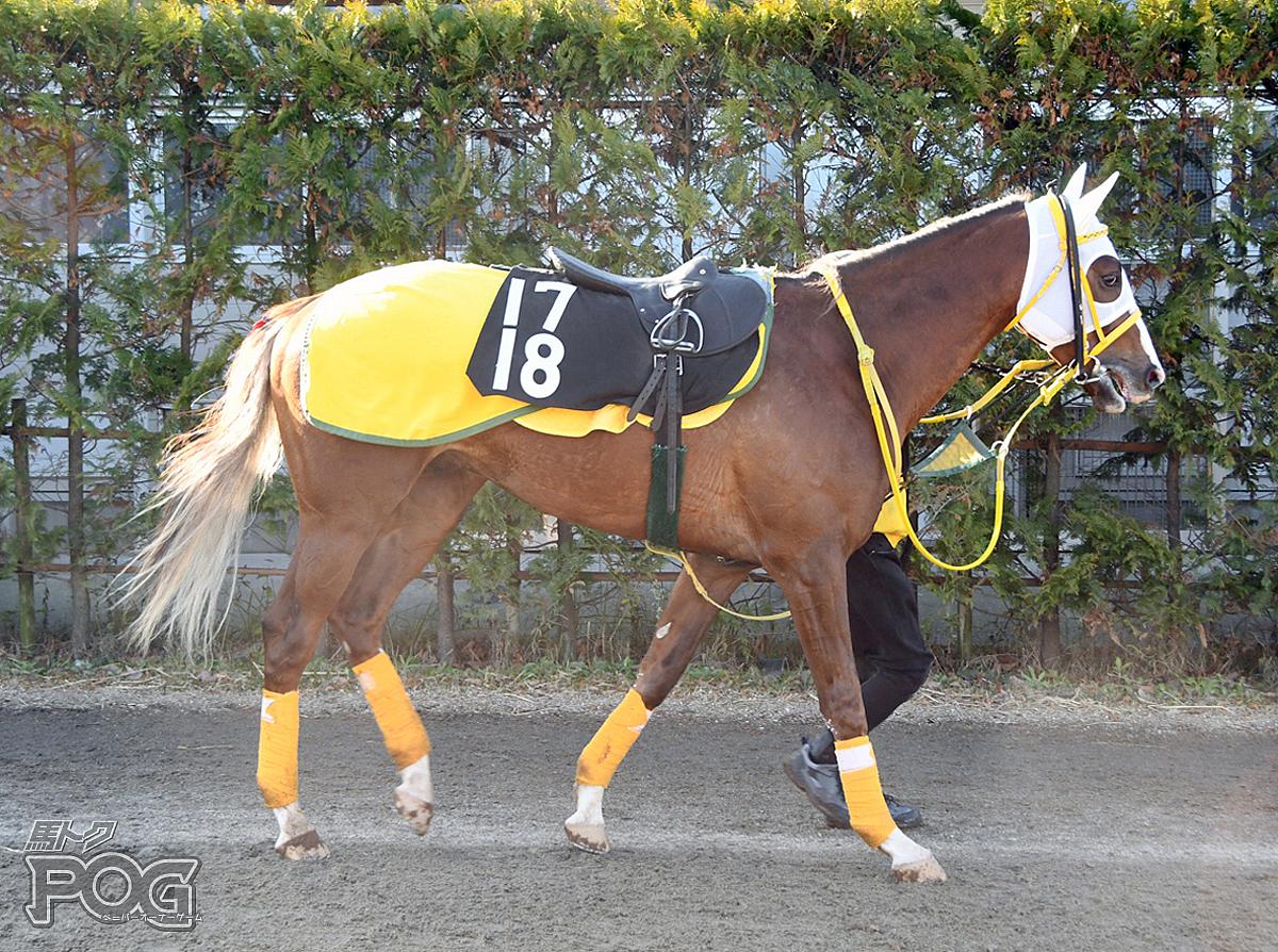 クリスタルシャインの馬体写真