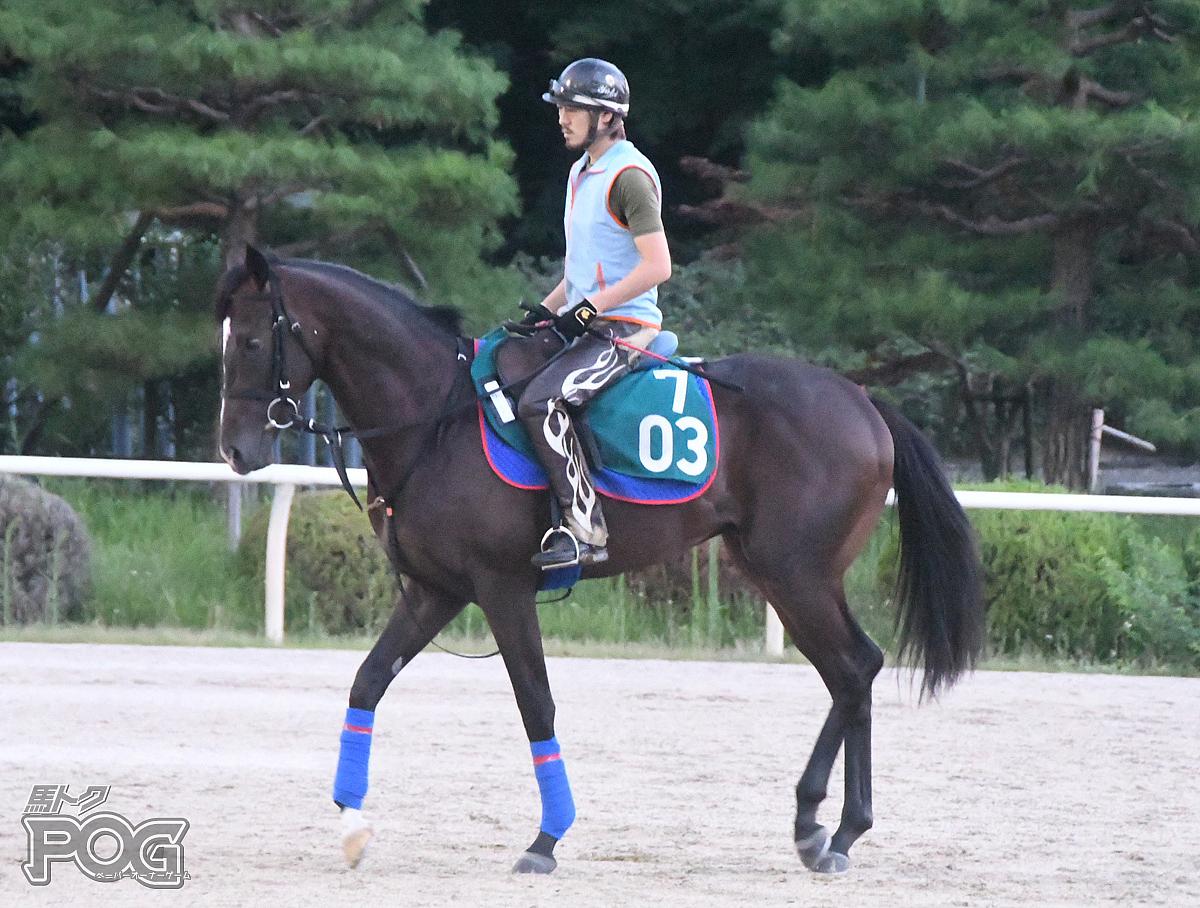 ワンウインの馬体写真