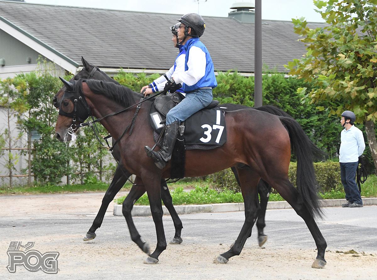 ウェーブスピリッツの馬体写真