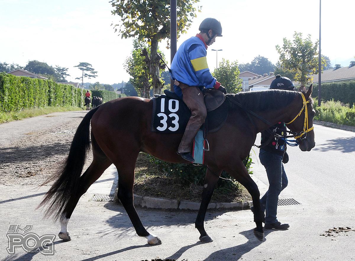 メイショウタフマンの馬体写真