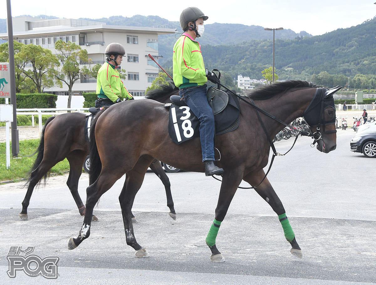 モンテルースの馬体写真