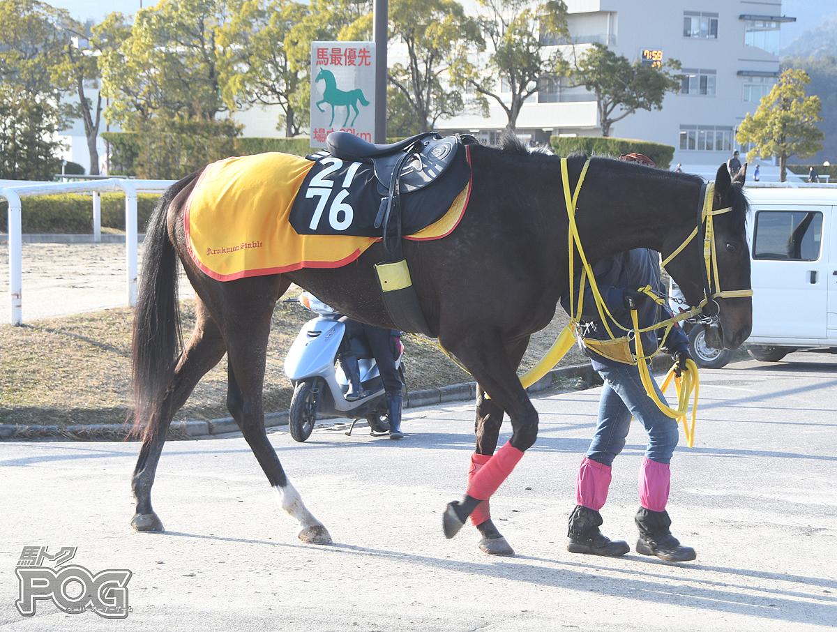 ブラックピクシーの馬体写真