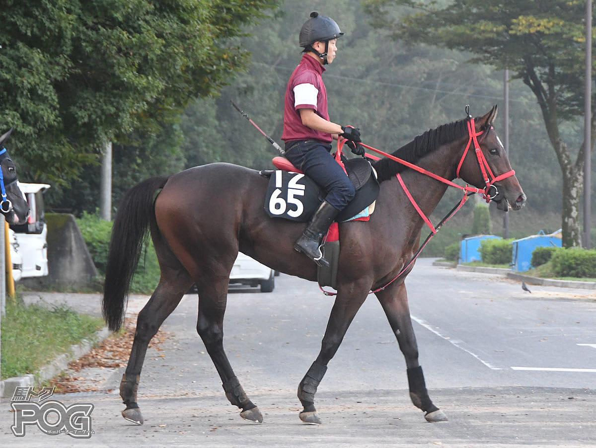 メイショウバルコラの馬体写真