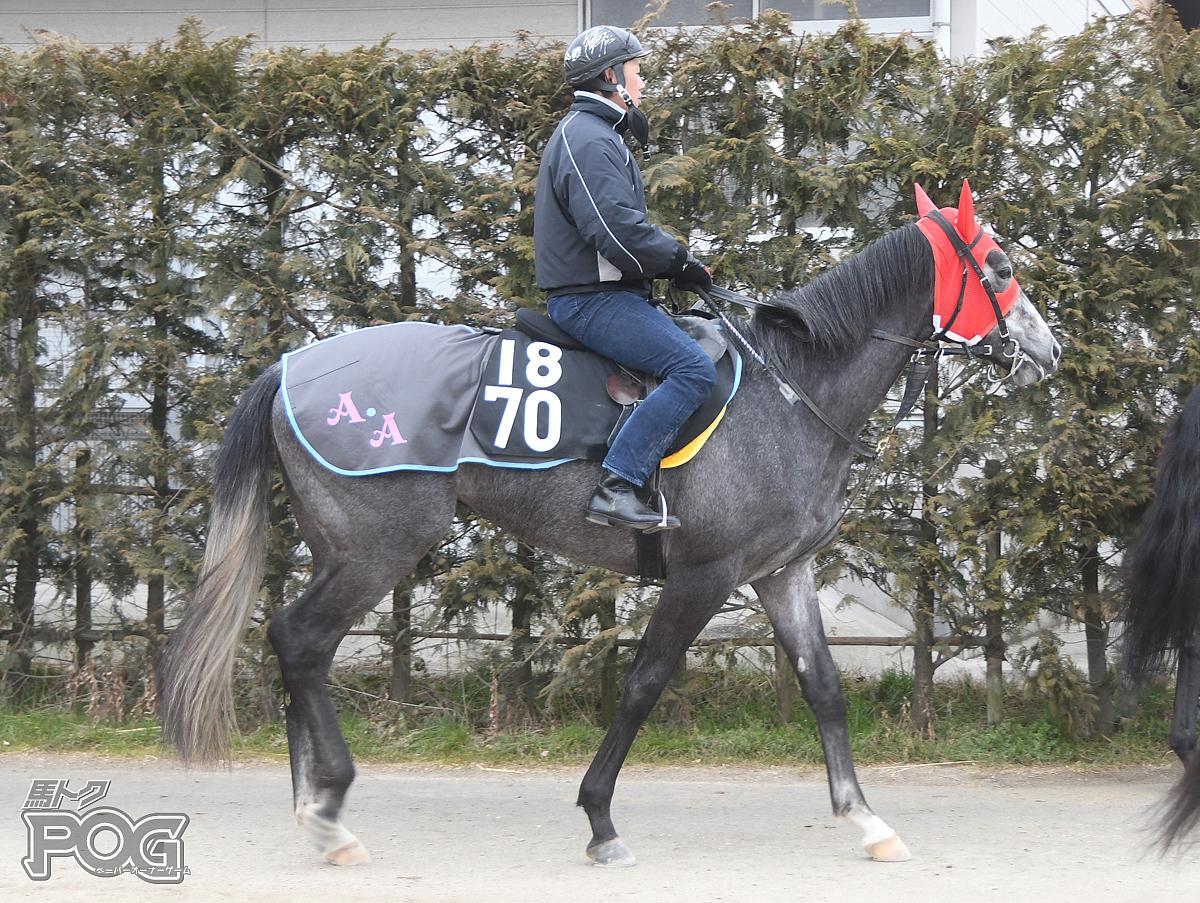 メイショウヤダマの馬体写真
