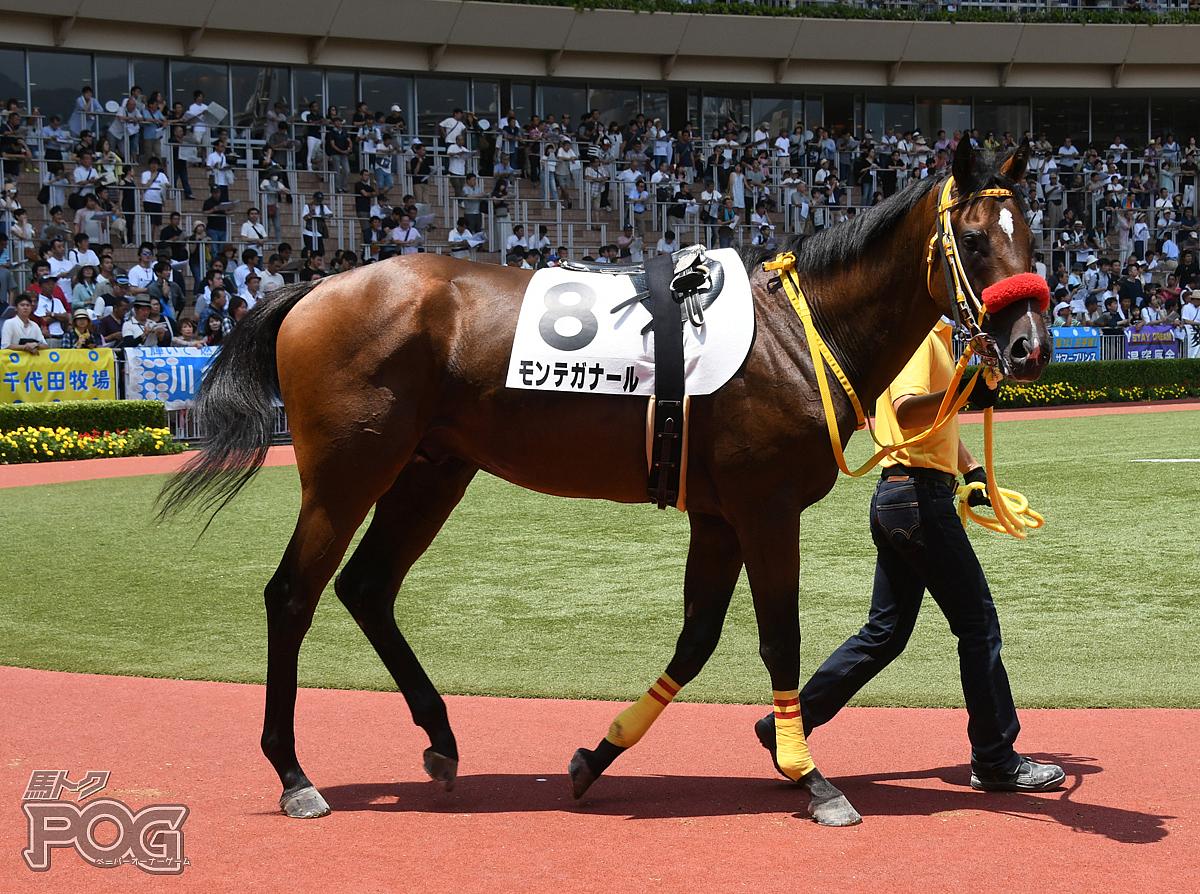 モンテガナールの馬体写真