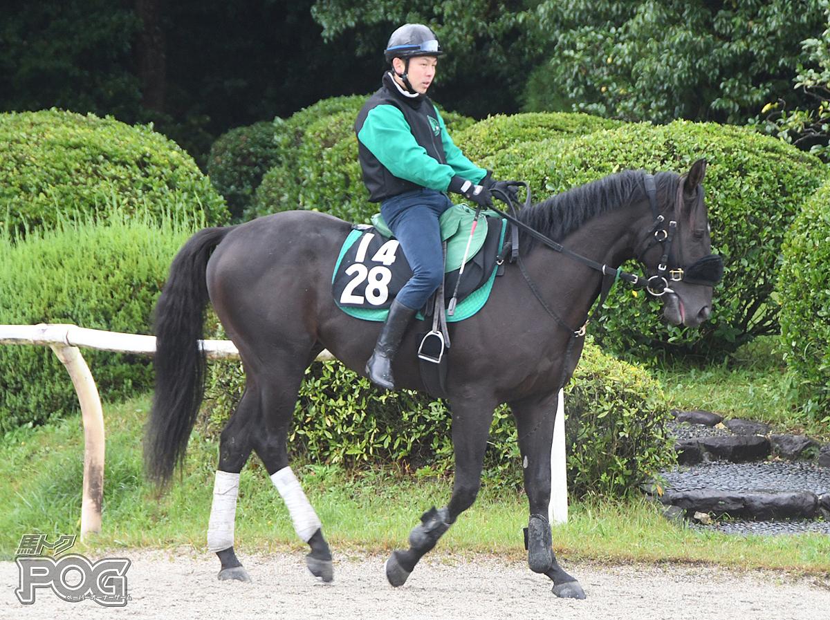 ヴィジャランスの馬体写真