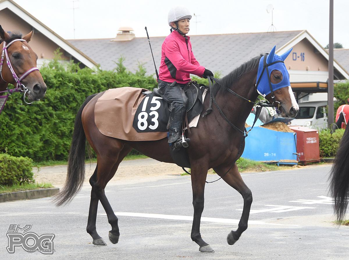 アランフェスリリーの馬体写真