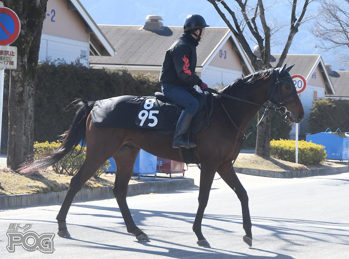 ブルベアトリュフの馬体写真
