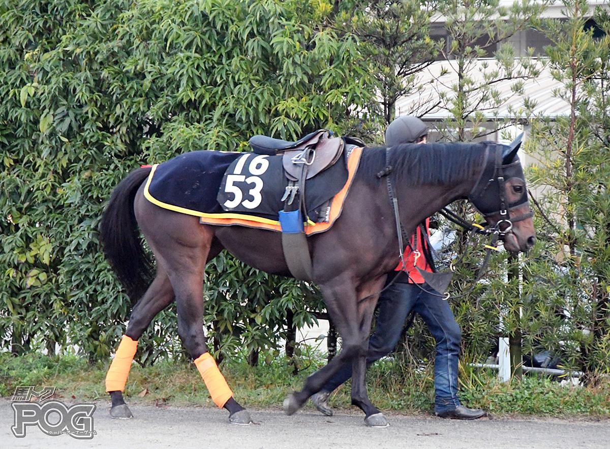 マイウェイカイの馬体写真