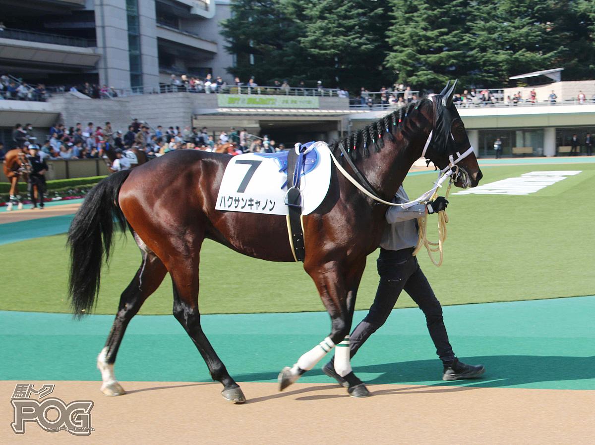 ハクサンキャノンの馬体写真