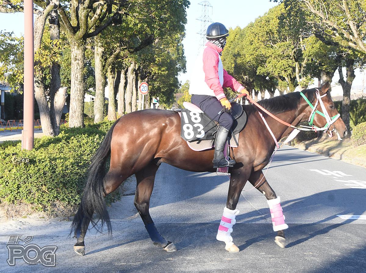 ビップムテキングの馬体写真