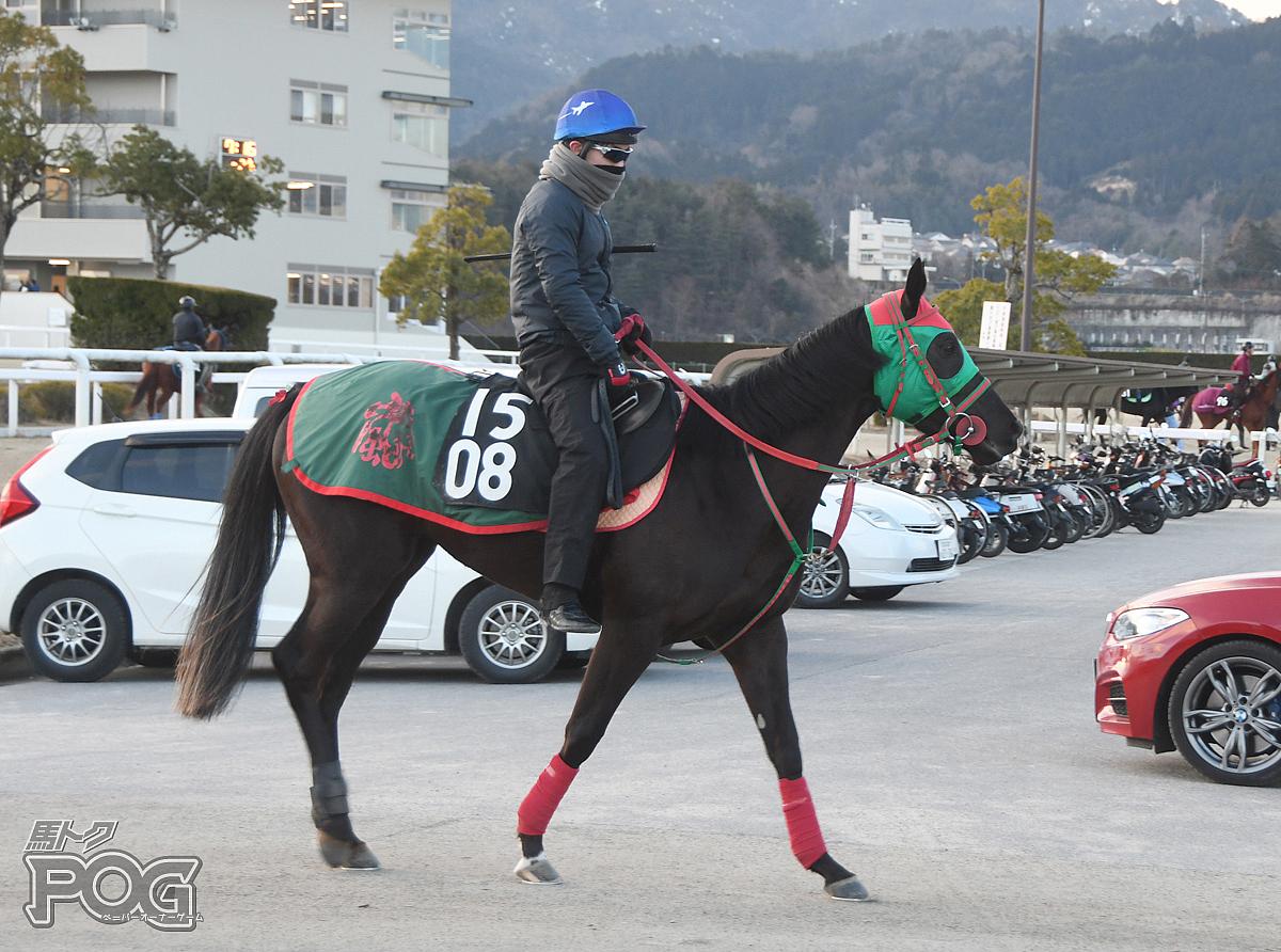 グロリアフライトの馬体写真