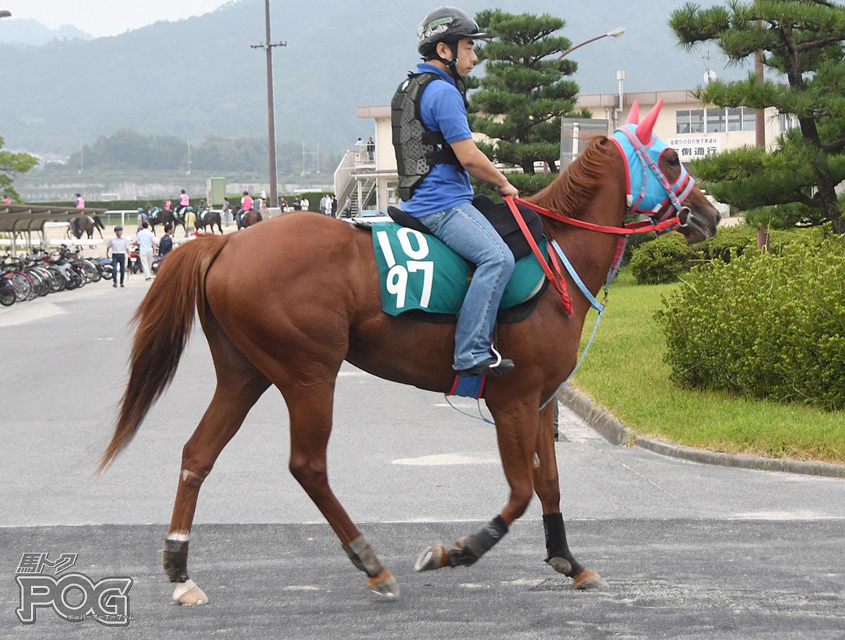 トンボイの馬体写真