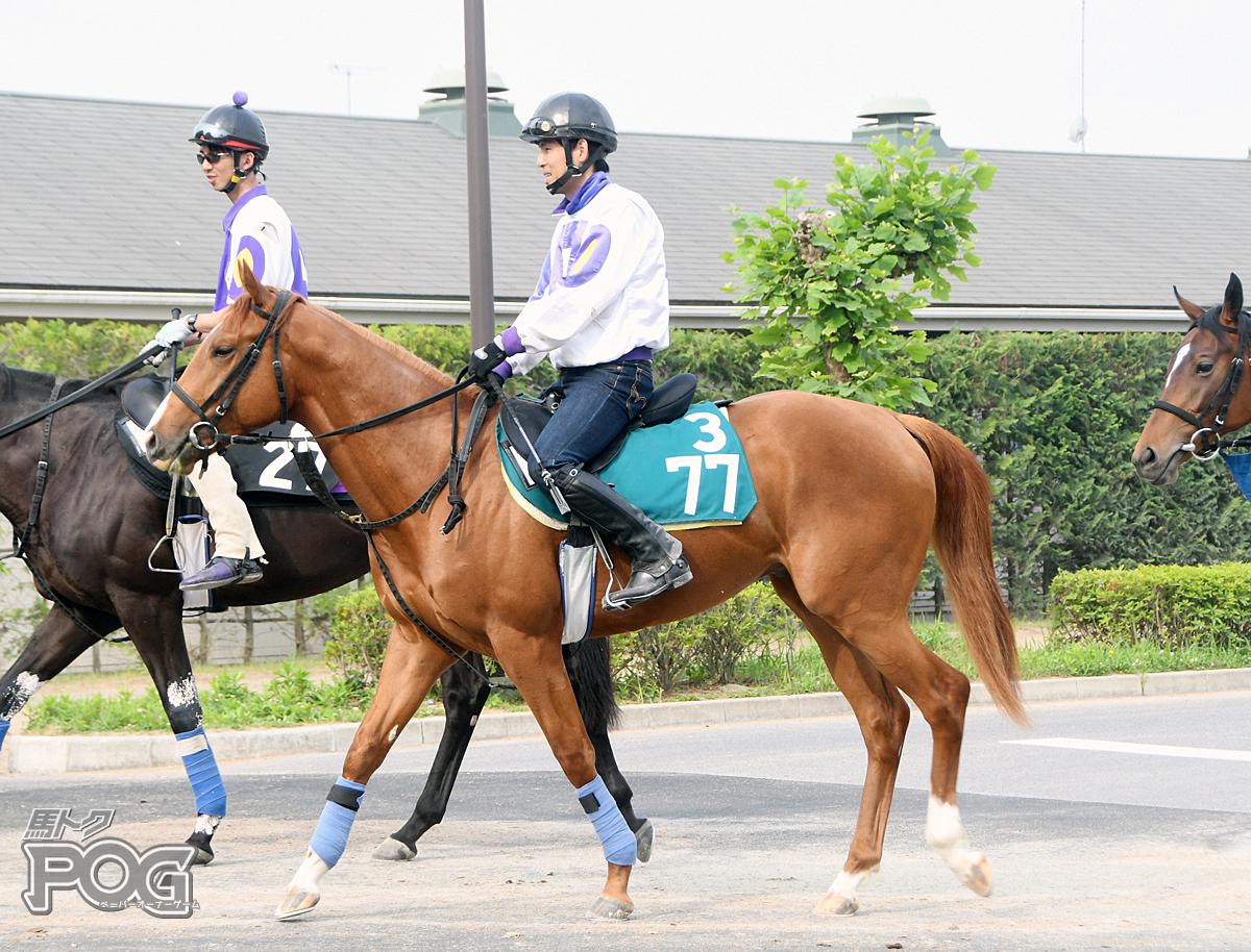 ナリタブルーの馬体写真