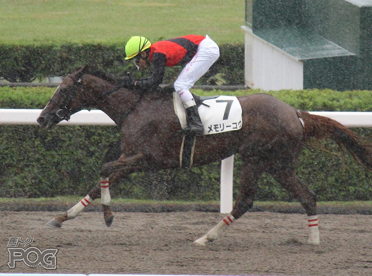 メモリーコウの馬体写真