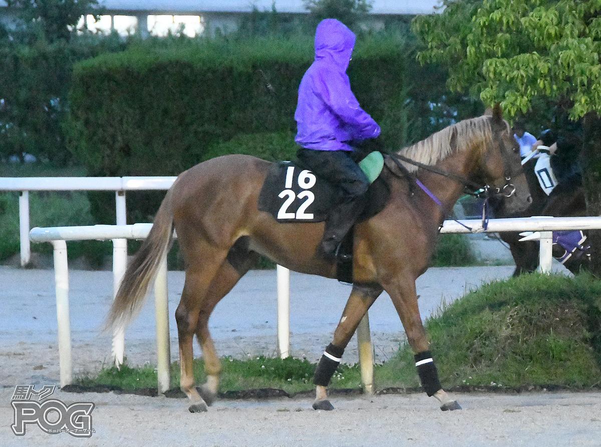 メイショウコウソクの馬体写真