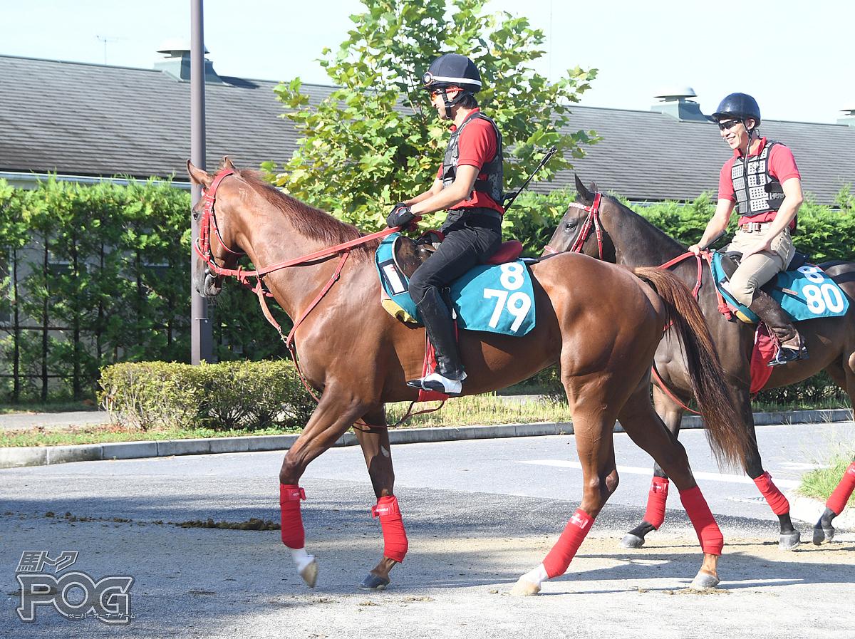 エスシーハンコックの馬体写真