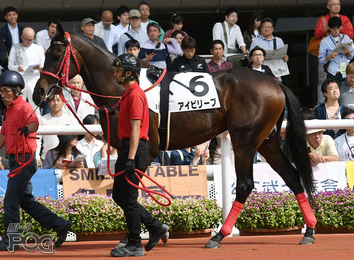アイビリーブの馬体写真