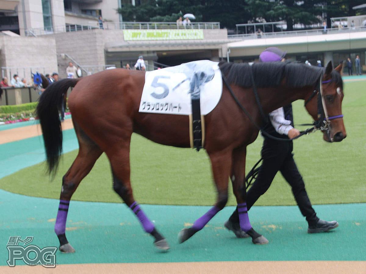 グランロックハートの馬体写真