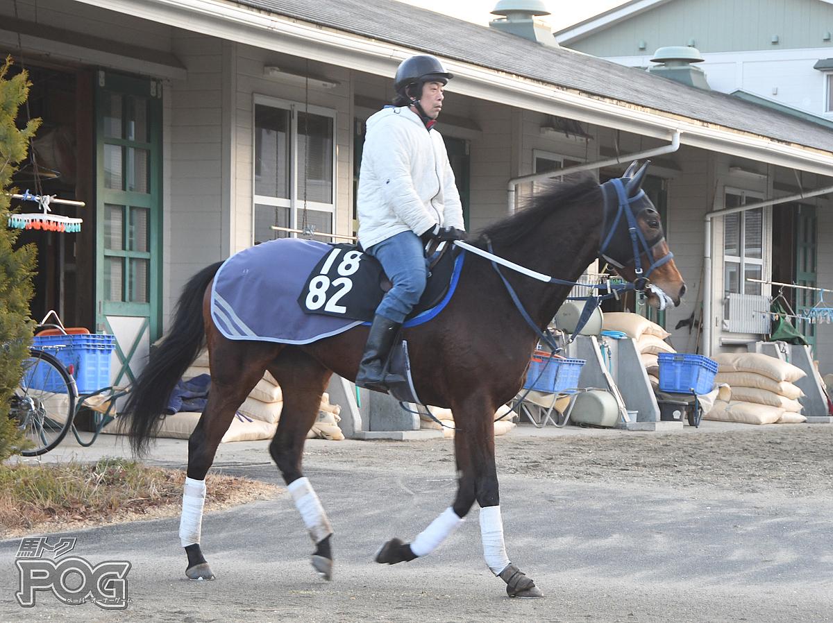 カンパニュラの馬体写真