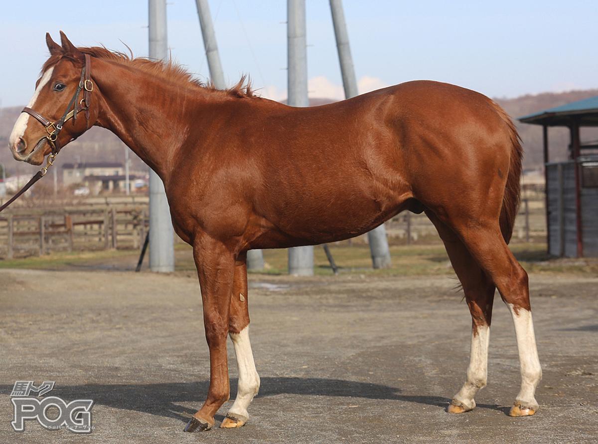 ジャックビーンズの馬体写真