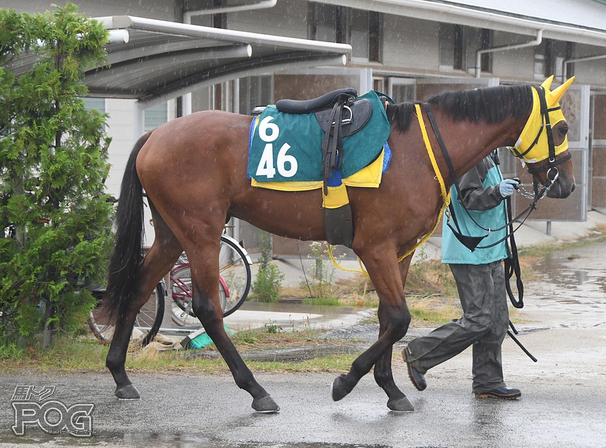 ジューンシェイカーの馬体写真