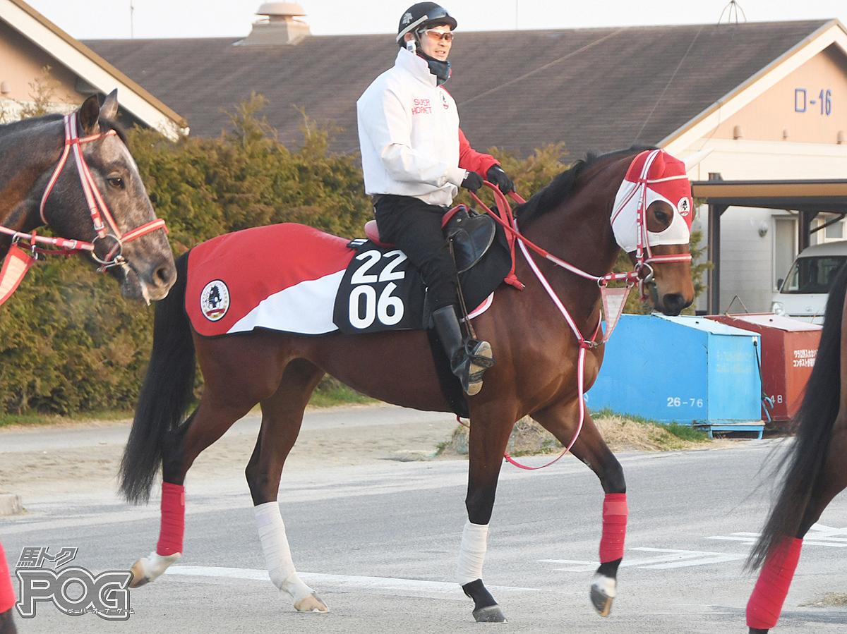 ルートロアーの馬体写真