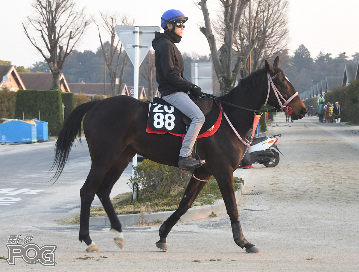 ヤマニンマデュローの馬体写真