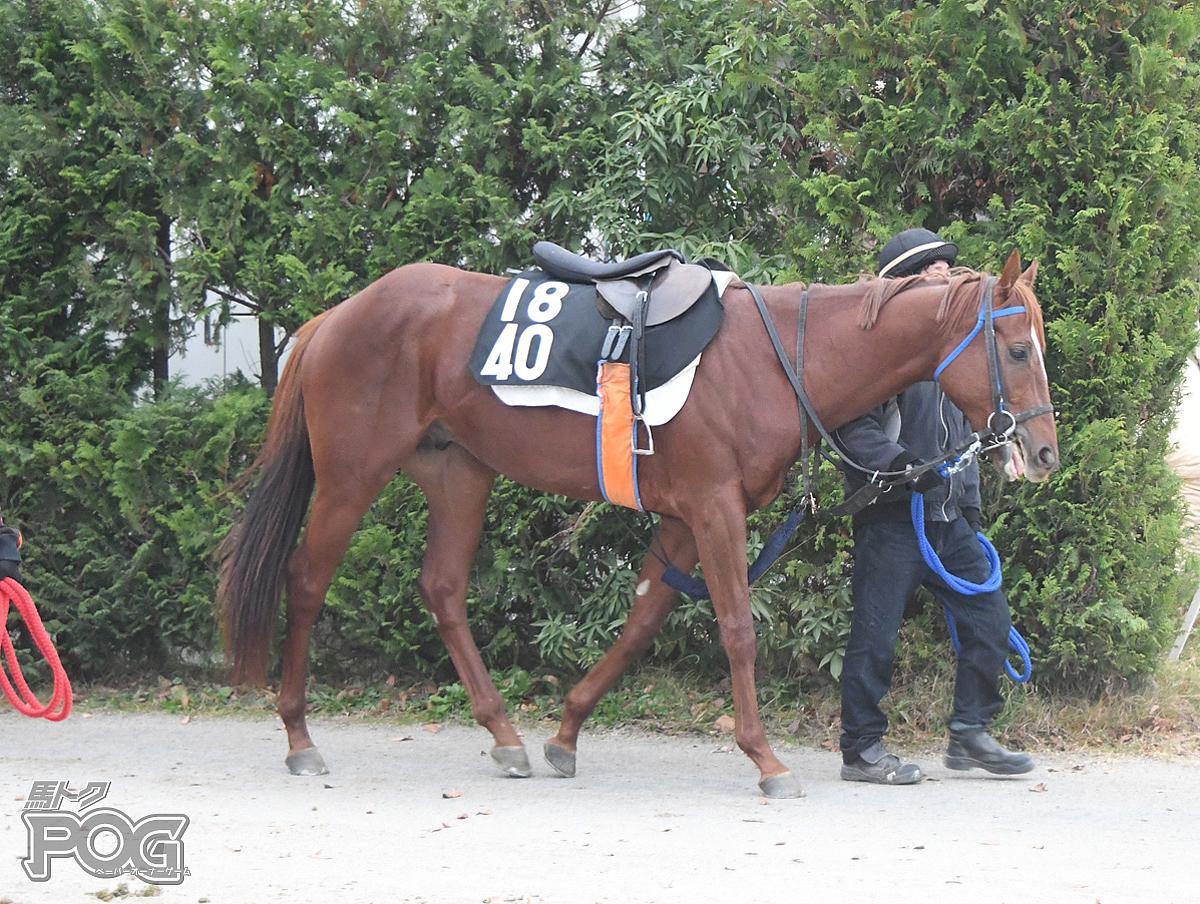 ウォーターアレグロの馬体写真