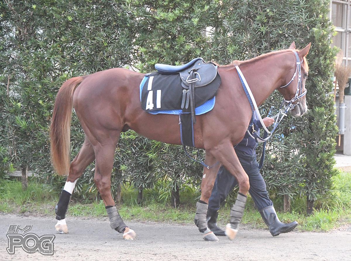 ウォーターボルグの馬体写真
