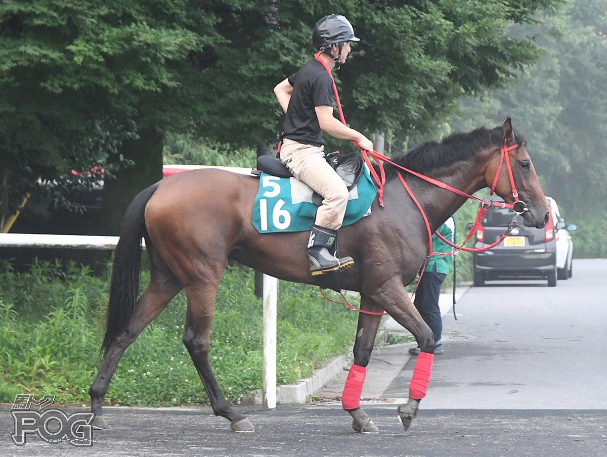アマノラヴィータの馬体写真