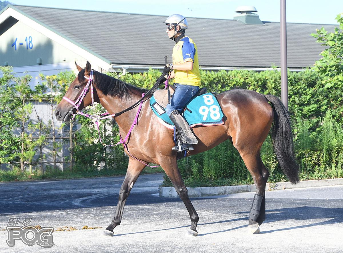 メイショウヴァルスの馬体写真