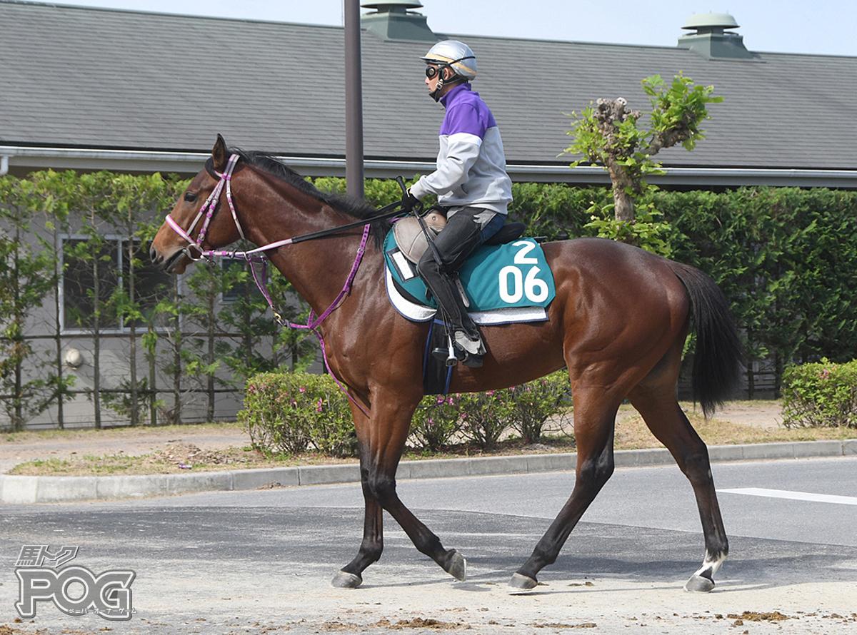 メイショウガッテンの馬体写真