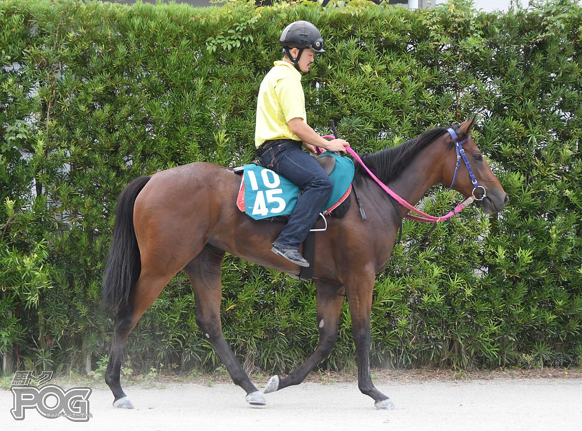 ミヤジサクラコの馬体写真