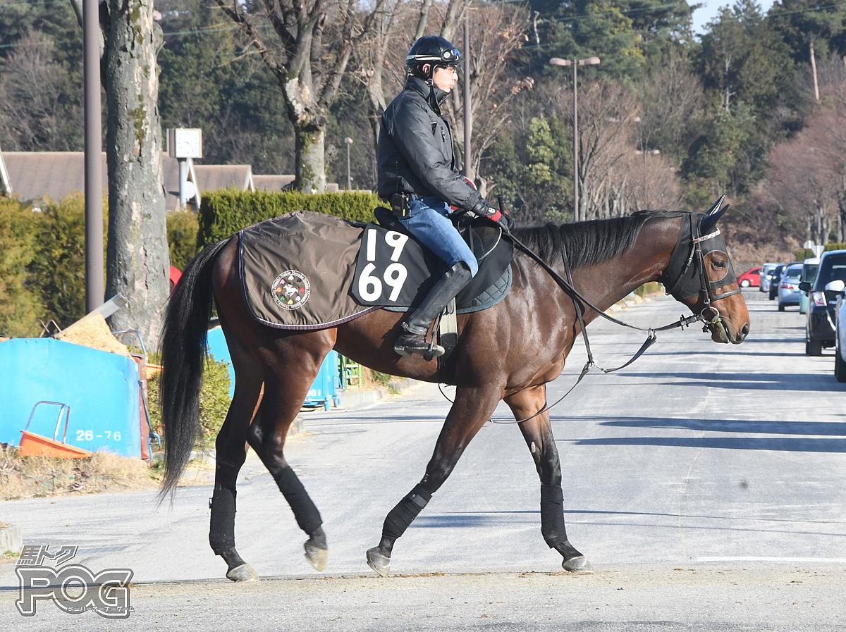 スナークビシャモンの馬体写真