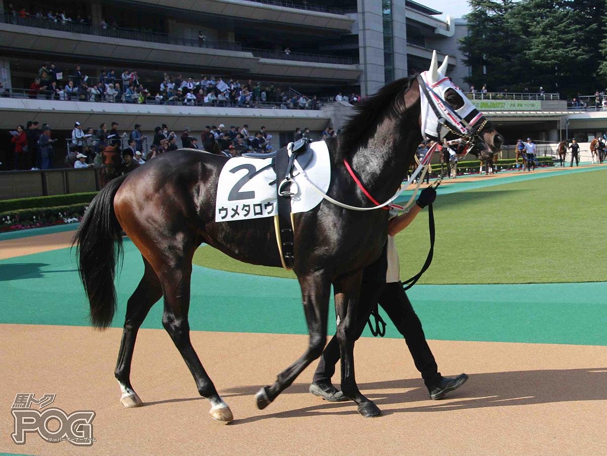 ウメタロウの馬体写真