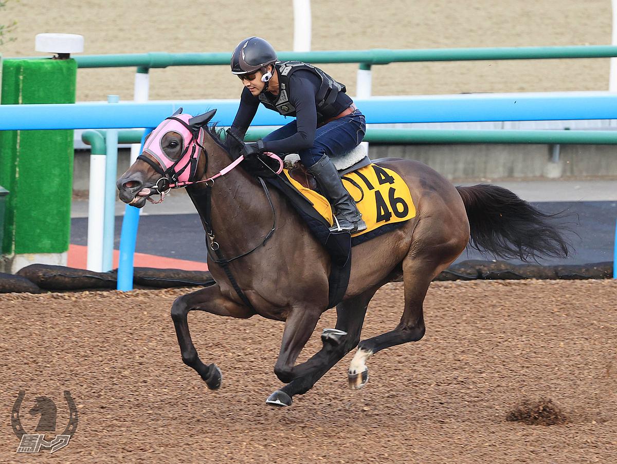 ビリーバーの馬体写真