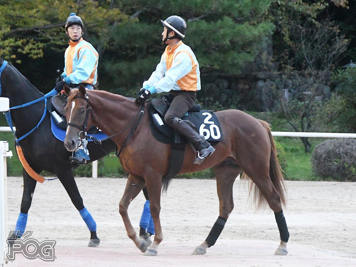 キングポセイドンの馬体写真