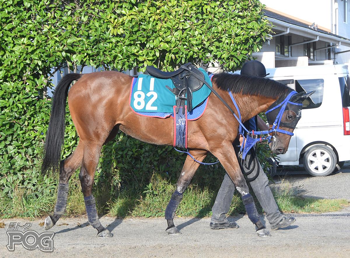 エレスチャルの馬体写真