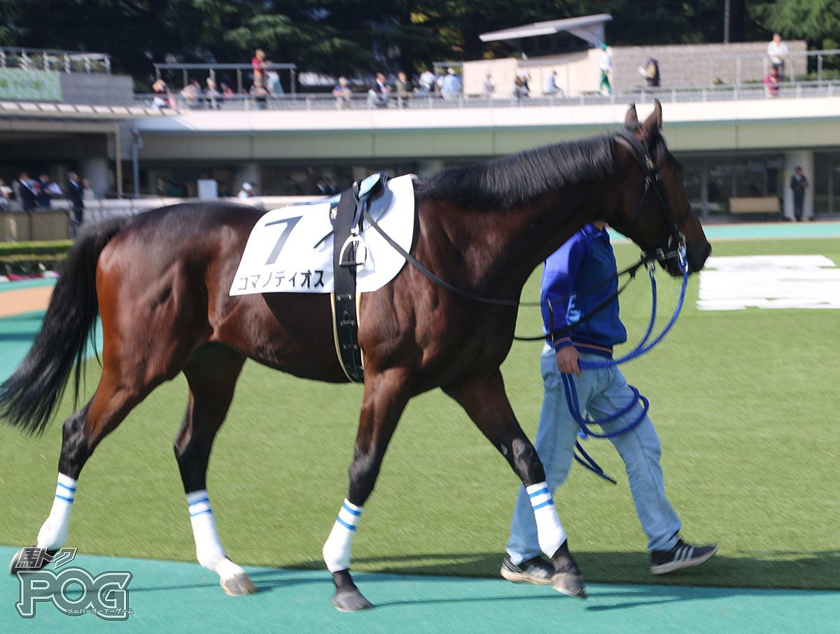 コマノディオスの馬体写真