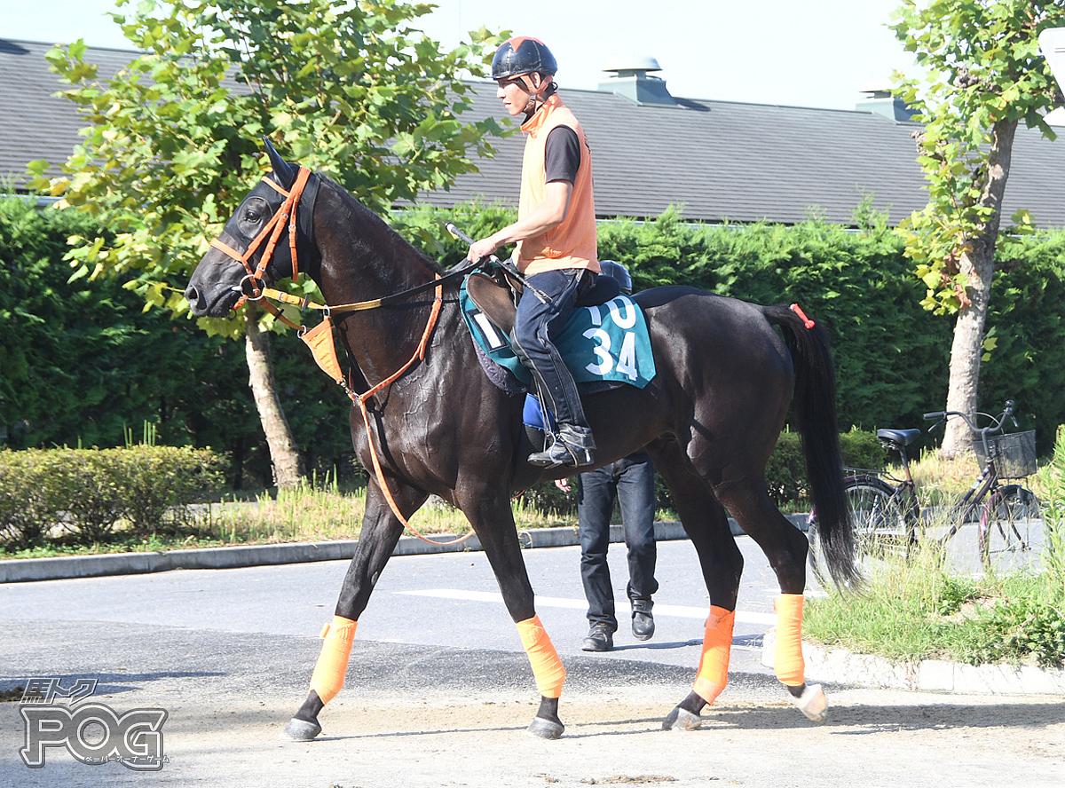 サワヤカタイドの馬体写真